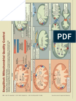 Cell Snapshot Mitochondrial Quality Control