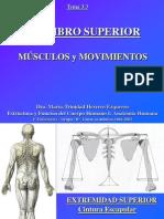 4.2 Miembro Superior Musculos y Movimientos