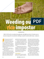 RT Vol. 11, No. 3 Weeding out a rice impostor