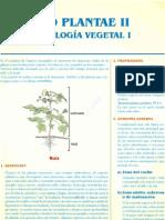 Sem1 - Reino Plantae IIU