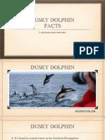Dusky Dolphin Facts