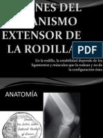 Lesiones Aparato Extensor Rodilla