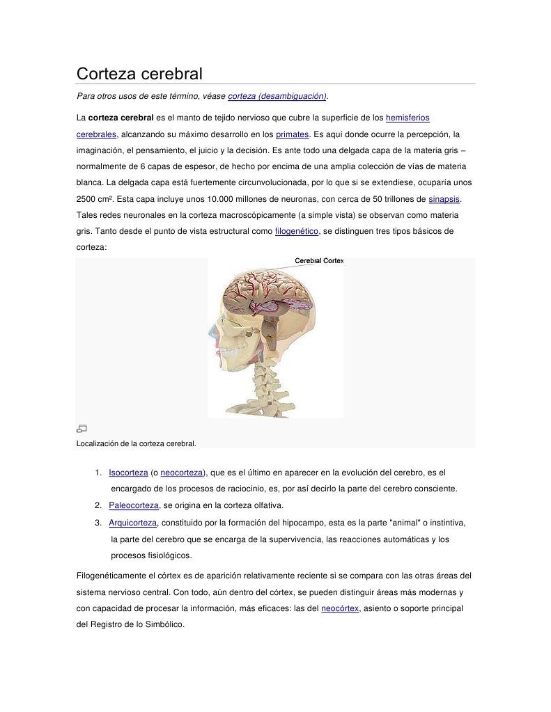 Microfotografía: Cerebro de paloma. H-E. En el esquema se muestra un corte  de sustancia gris de cerebro.