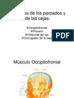 Músculos de los parpados y de las cejas