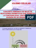 Introduccion Al Metabolismo y Bioenergetica