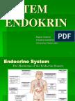 3 - Anatomy of Endoctrine Organs [2]
