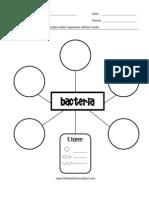 Bacteria Graphic Organizer