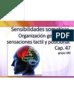 Sensibilidades somaticas