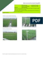 2011DS MET 1-Irrigated - Week 4 (February) NUEVA ECIJA