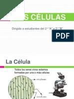 la celula 1