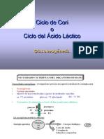 Biologia Celular Mod2_4 Ciclo Cori