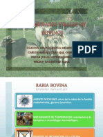 Enfermedades Virales en Bovinos (1)