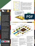 Curtiembres Bufalo - Infografia