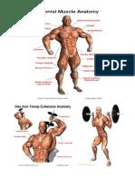 Advanced Weight Training Program