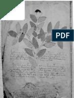 El_Manuscrito_Voynich__Misterio_