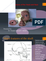 Maxillofacial Head