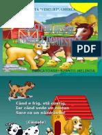 ghicitori_animale_domestice