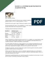 51649475 Cultura Ecologica a Ciupercilor Pleurotus