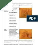 Program de exerciţii dinamice corective si de tonifiere KLAPP