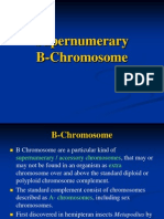 Supernumerary B Chromosome