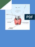Hashimoto's Thyroiditis and Its Homeopathic Self Treatment Scheme _ Bashir Mahmud Ellias