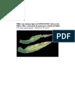 Prof Boanerges - Sintomas Plantas