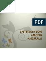 Interaction Among Animals2