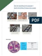 Pract. Inmunologia_Estructuras Celulares, Fagocitosis in Vivo, e Inmunizacion