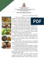 Abricó do Pará - Corantes.docx