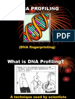 DNA Fingerprinting Powerpoint NDK Modification