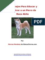 4 Consejos Para Educar y Adiestrar a Un Perro de Raza Akita