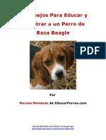 4 Consejos Para Educar y Adiestrar a Un Perro de Raza Beagle