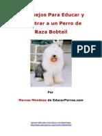 4 Consejos Para Educar y Adiestrar a Un Perro de Raza Bobtail
