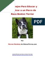 4 Consejos Para Educar y Adiestrar a Un Perro de Raza Boston Terrier
