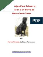 4 Consejos Para Educar y Adiestrar a Un Perro de Raza Cane Corso