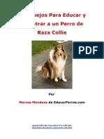 4 Consejos Para Educar y Adiestrar a Un Perro de Raza Collie