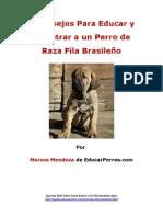 4 Consejos Para Educar y Adiestrar a un Perro de Raza Fila Brasileño