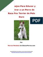 4 Consejos Para Educar y Adiestrar a Un Perro de Raza Fox Terrier de Pelo Duro