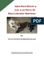 4 Consejos Para Educar y Adiestrar a Un Perro de Raza Labrador Retriever