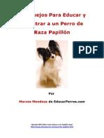 4 Consejos Para Educar y Adiestrar a Un Perro de Raza Papillon