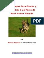 4 Consejos Para Educar y Adiestrar a un Perro de Raza Pastor Alemýýn