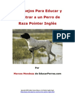 4 Consejos Para Educar y Adiestrar a un Perro de Raza Pointer Inglés