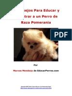 4 Consejos Para Educar y Adiestrar a Un Perro de Raza Pomerania