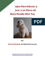 4 Consejos Para Educar y Adiestrar a Un Perro de Raza Poodle Mini Toy