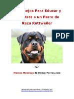 4 Consejos Para Educar y Adiestrar a Un Perro de Raza Rottweiler