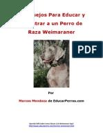 4 Consejos Para Educar y Adiestrar a Un Perro de Raza Weimaraner