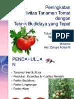 Peningkatan Produktivitas Tanaman Tomat Dengan Teknik Budidaya Yang Tepat