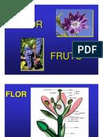 Bot Flor Fruto