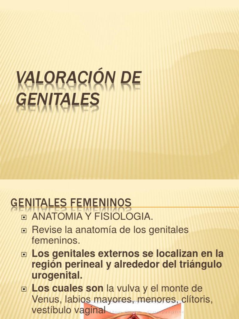Excepcional Anatomía De Un Vag Ideas - Imágenes de Anatomía Humana ...