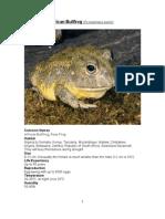 Care Sheet - African Bullfrog